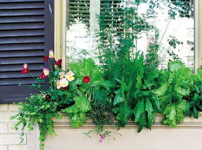开满鲜花的窗户 打造窗台花园的6细节